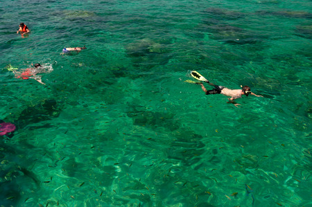 swimm: Tourists snorkeling in crystal clear water at Phi Phi islands Thailand