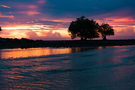 mangroves: Silhouetted mangroves on rising tide after sunset in Phuket, Thailand