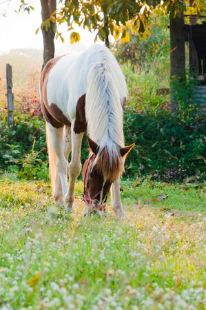 Horse eating grass in a gardens in the morning