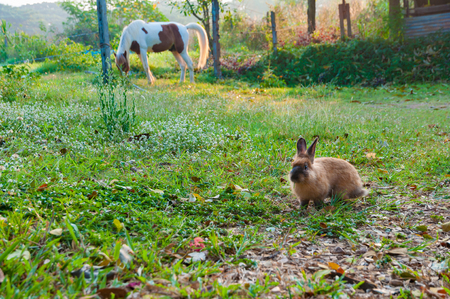 Soft focus of adorable rabbit eating grass in front of a horse behind in the morning Zdjęcie Seryjne