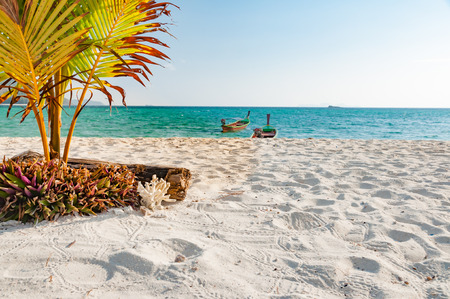 小さなブッシュと透き通った水と背景、プーケット、タイのボートで砂浜に植えられた若いココナッツの木と空のビーチ 写真素材