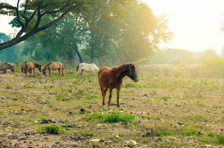 馬と写真フィルターで草を食べる群れ 写真素材