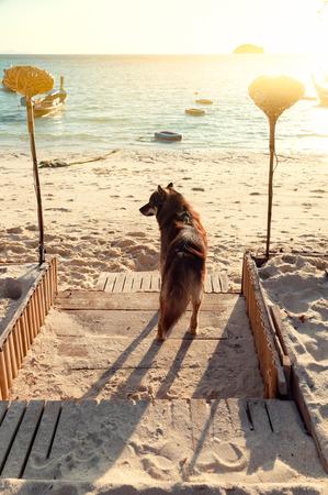茶色の犬は、ビーチの前の所有者を待っています。 写真素材