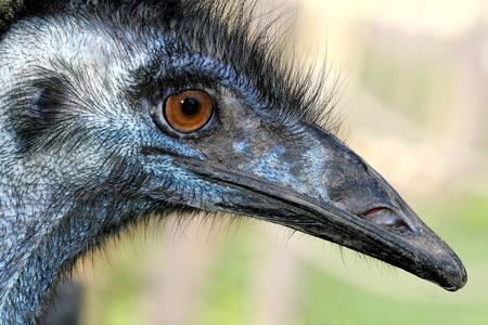 emu: UEM