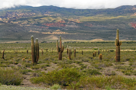 nevado: Los Cardones National Park, Argentina Stock Photo