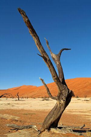vlei: Dead Vlei, Namib desert