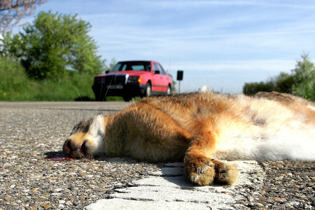 liebre: liebre muerta