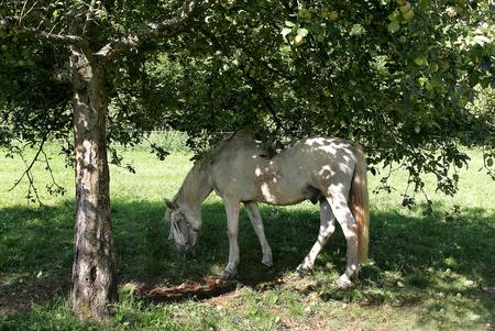 nostrils: Horse Stock Photo