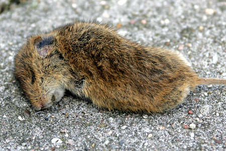 aas: dead mouse