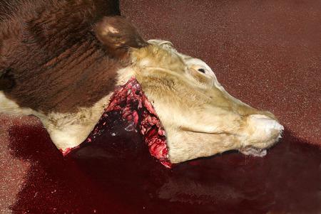 slaughter: Slaughterhouse