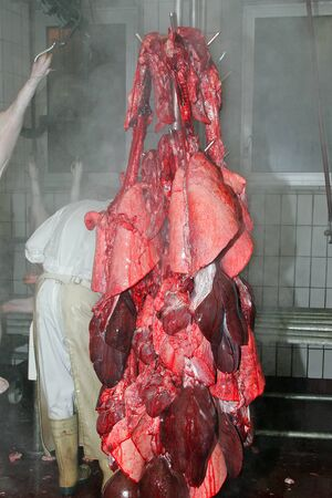 offal: Slaughterhouse