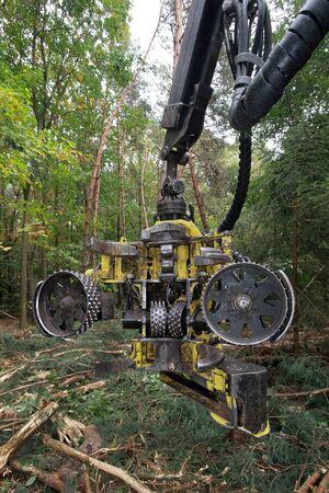 timber harvesting: Timber harvesting