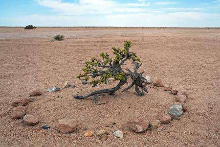 sandy soil: Taler bush, Namibia