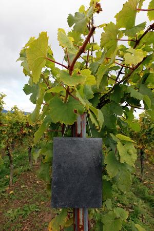 wine country: Vineyard with slate