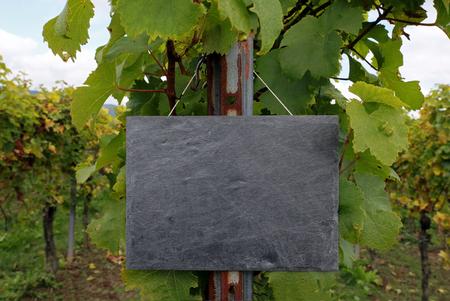 winegrowing: Vineyard with slate