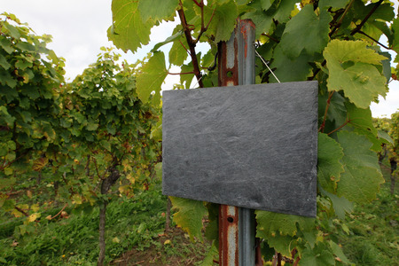 unlabeled: Vineyard with slate