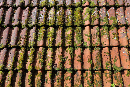 housetop: mossy roof