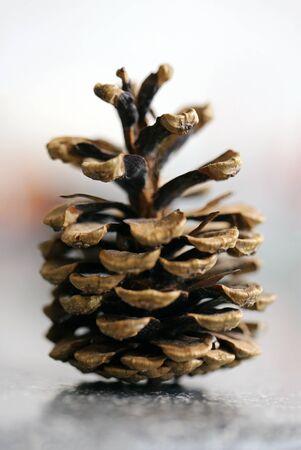Pine cone Reklamní fotografie