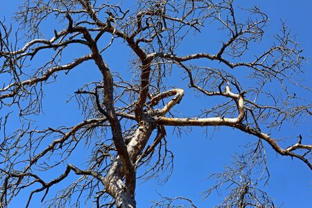 Leafless treetop and blue sky Standard-Bild