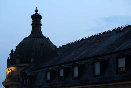 Crows on a roof