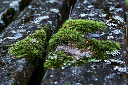 moss on an old wooden bench