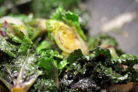 kalettes in closeup, kalettes