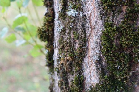 Moss on tree Banco de Imagens