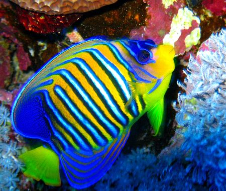 Egypt marine live tropical fish Stock Photo