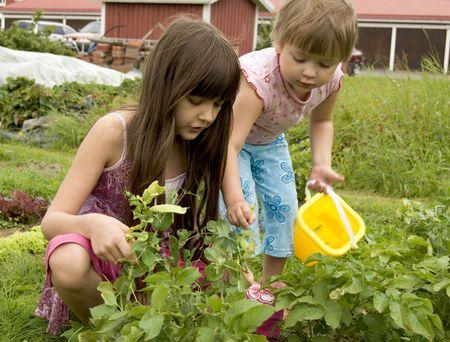 Children in kitchen garden