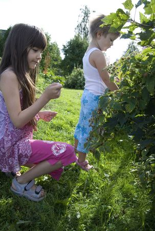 Children in kitchen garden