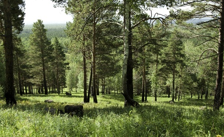 Siberia view