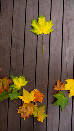 Autumn leaves over wooden background. Copy space