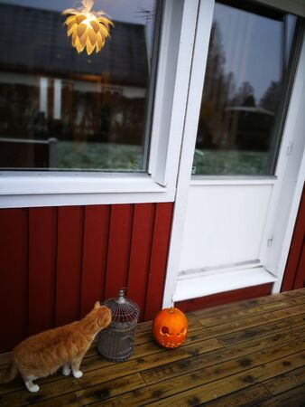 traditional swedish house pumpkin dekoration in Halloween