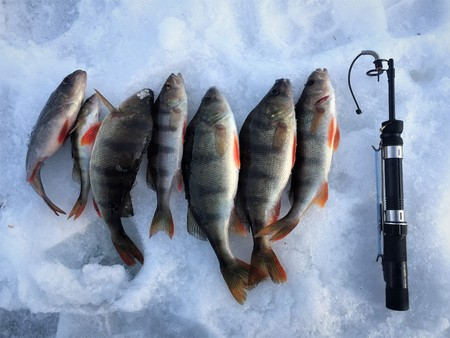 Ice fishing. Winter fishing, catching a fish