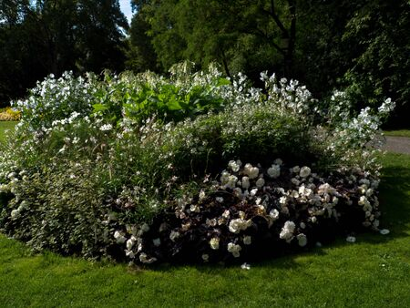 White Flower sity design in park, Stockholm