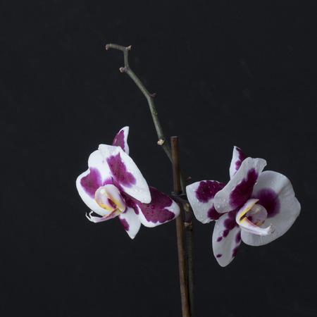 ultra violet orchid Фото со стока