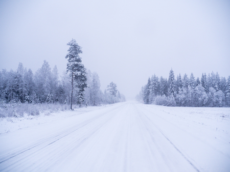 Winter forest in swedish lapland Stok Fotoğraf - 115505069