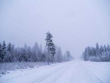 Winter forest in swedish lapland Фото со стока