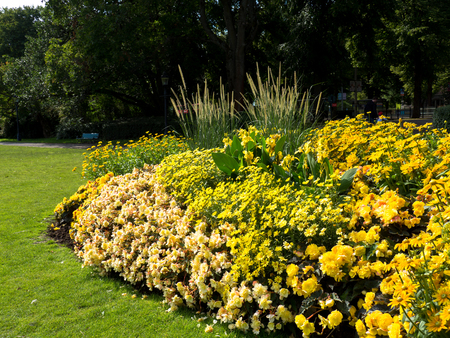 Yellow Flower sity design in park, Stockholm 스톡 콘텐츠