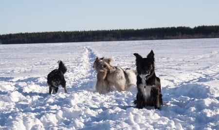 Dog in winter landscape. 免版税图像