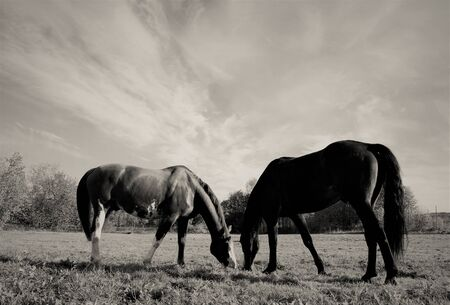 two horses love at sky background