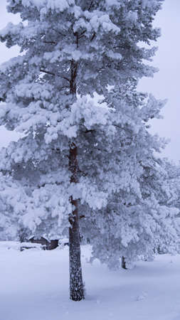 deep snow in the North of Sweden in January