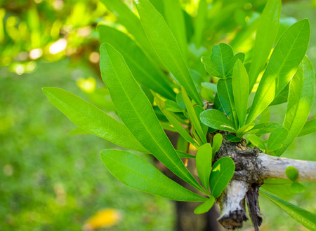 leafed: Close up of a green leafed plant