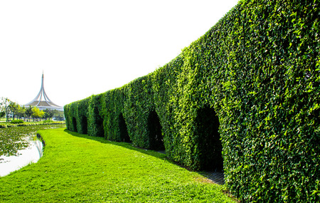 hedgerow: Arch shapes cut into a tall hedgerow