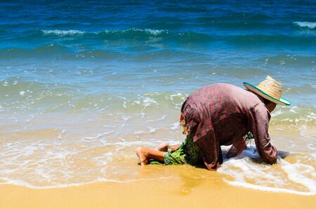 oceanside: Elderly lady digging for sheels at oceanside Stock Photo