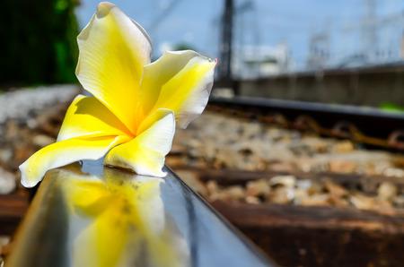 sleeper: Lonely flower sleeping on a railway sleeper