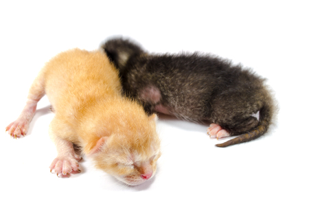 wail: Newly born kittens with focus on ginger kitten