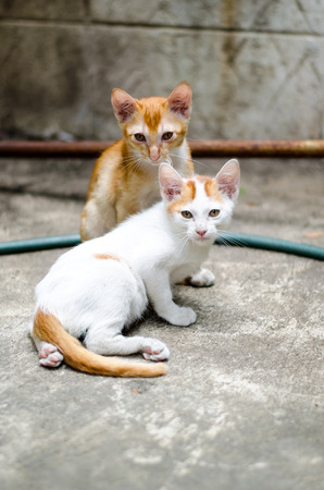 The two adorable kittens looking sad together
