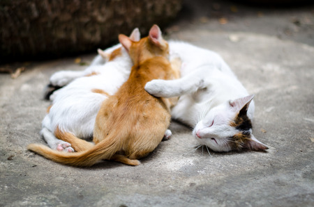 lighthearted: Kittens brood feeding by mother cat