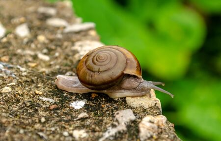 Close up of single lonely snail in garden